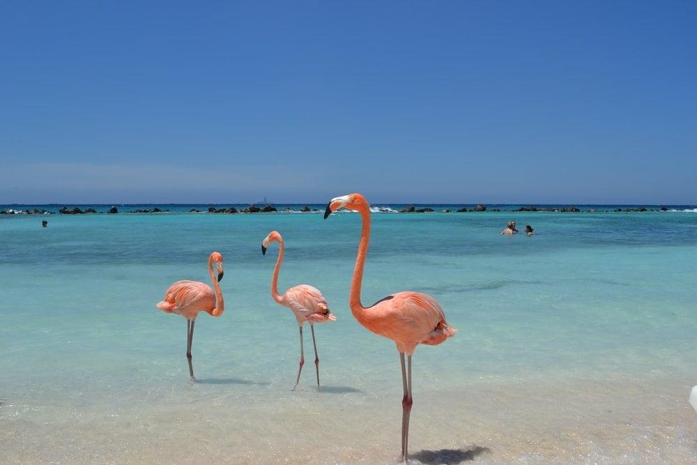Flamingos in a private island.