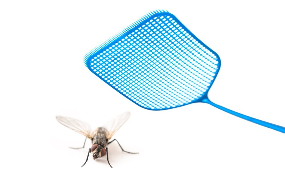 A fly and a blue fly swatter.