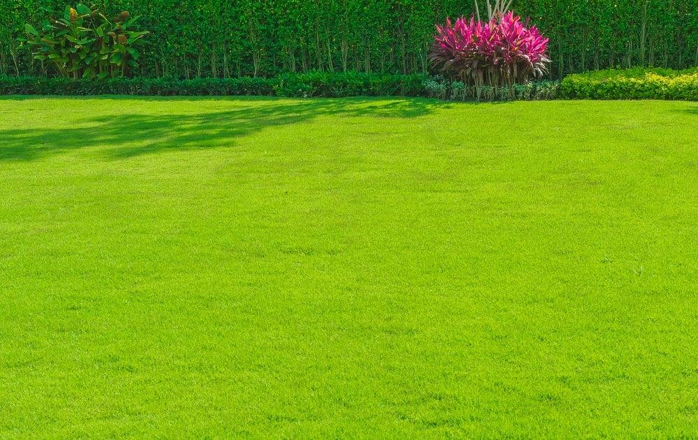 A wide expanse of well-trimmed green grass.