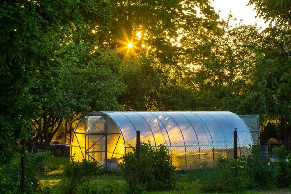 Greenhouse in a lush garden.