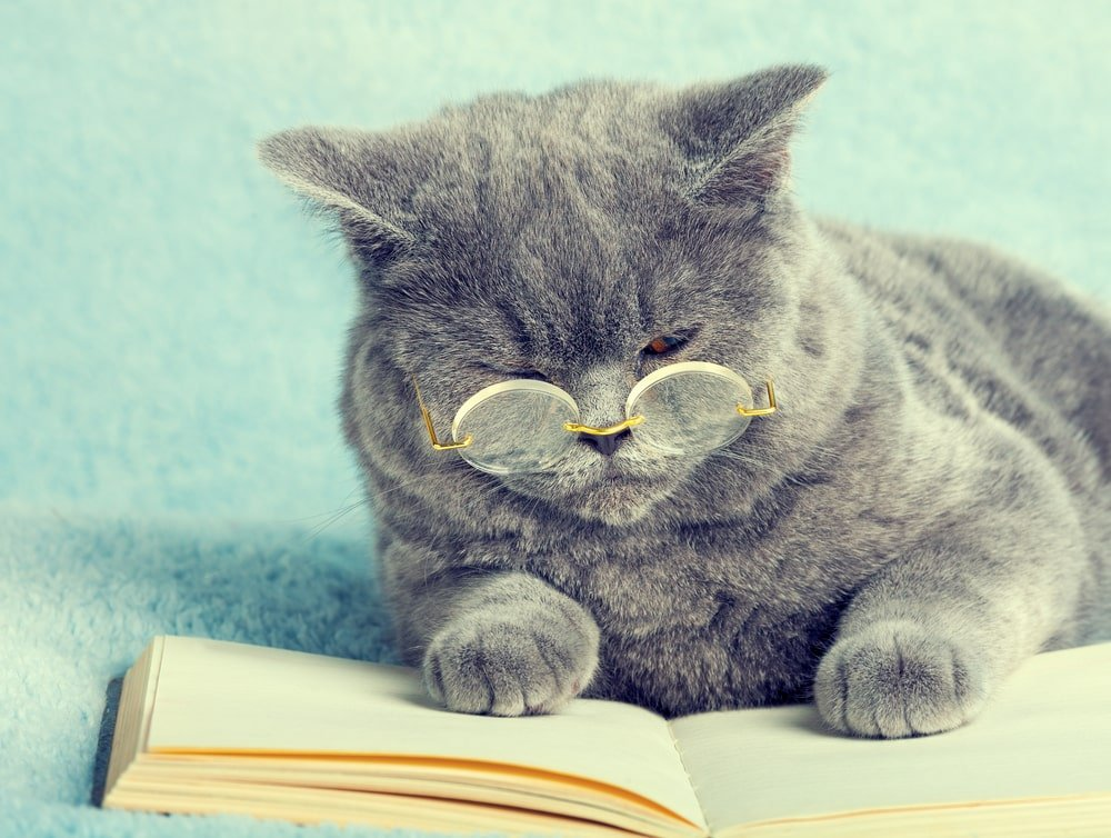 British cat wearing glasses and reading a book.