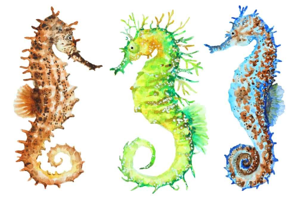 Three colorful watercolor seahorses.
