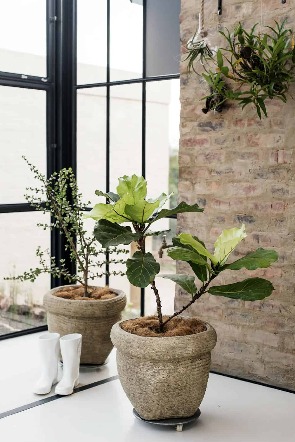 Fresh indoor plants in The Conservatory designed by Nadine Engelbrecht.