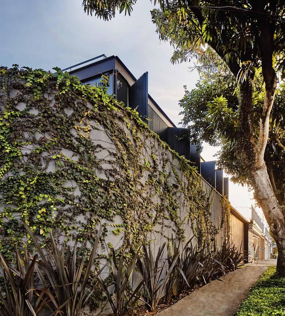 Concrete fence covered in creeping plants surrounding the Casa Box designed by Flavio Castro.