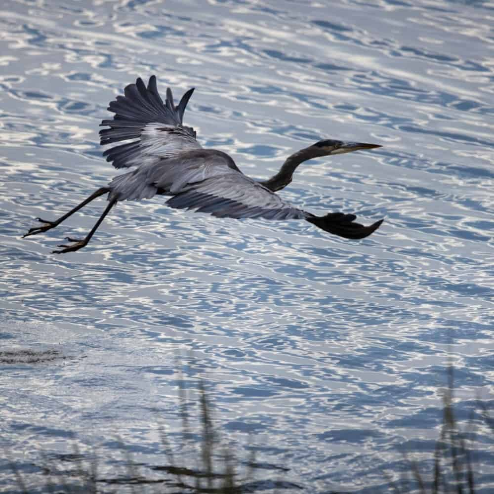 This flying bird is about to land on the water's surface. Images courtesy of Toptenrealestatedeals.com.
