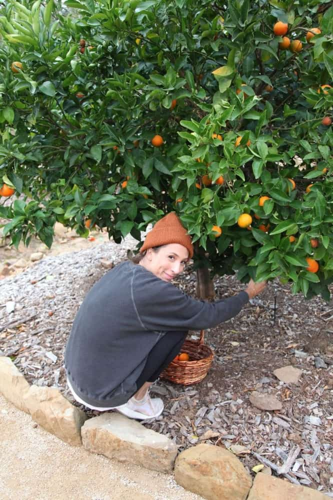A look at the orange tree, with its fruits ready to be picked up. Images courtesy of Toptenrealestatedeals.com.