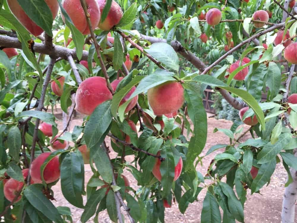 The ranch offers a wide variety of fruit trees that are all very well maintained. Images courtesy of Toptenrealestatedeals.com.