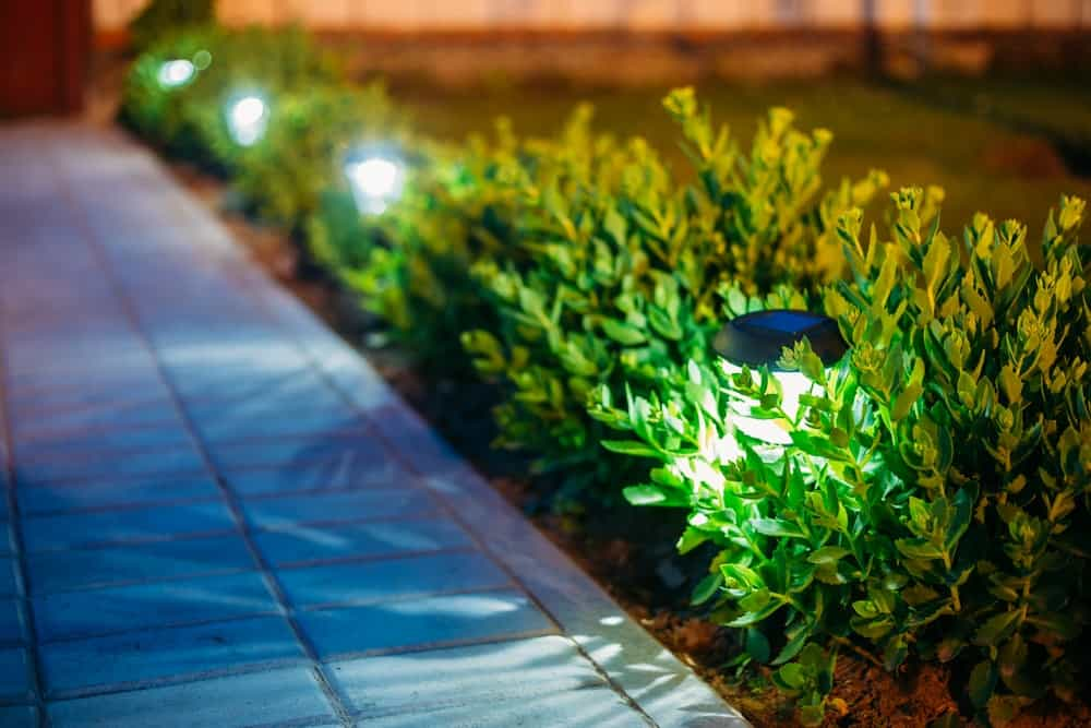 Close-up of outdoor lighting lining the side of the walkway among the shrubs.