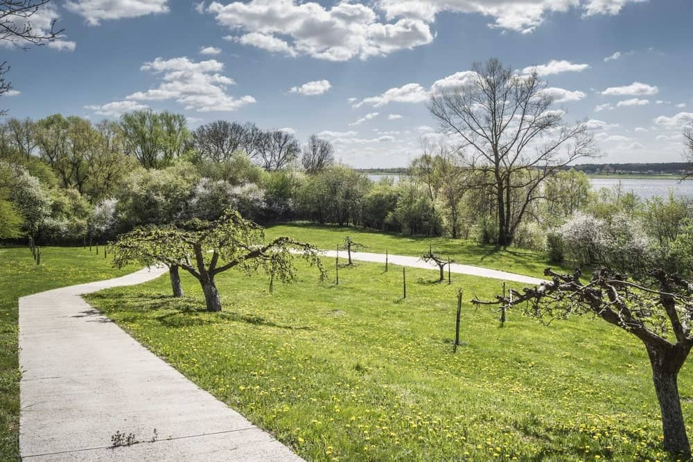 Concrete pathway leading to the By The Way House designed by Robert Konieczny KWK Promes.