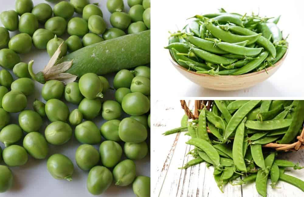 3 types of peas - photos