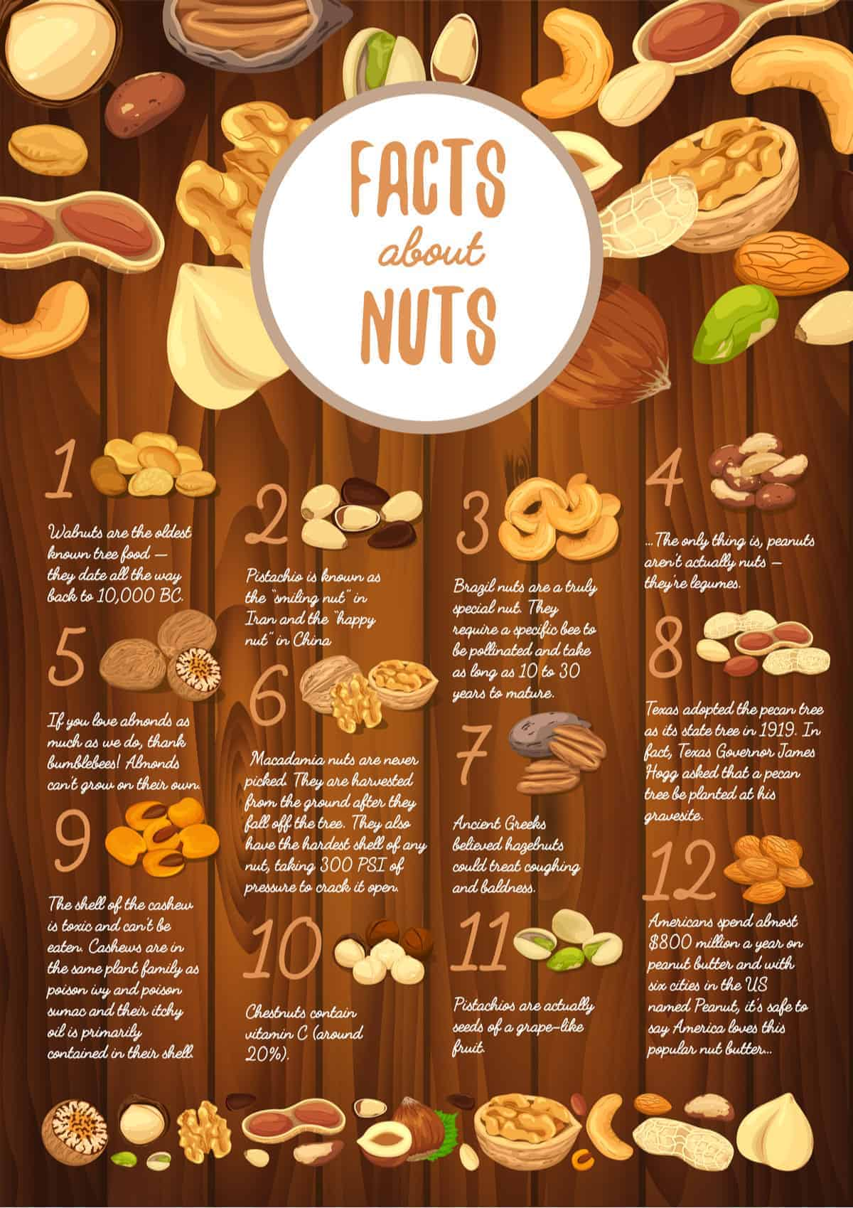 Inforgraphic Chart: interesting nut facts