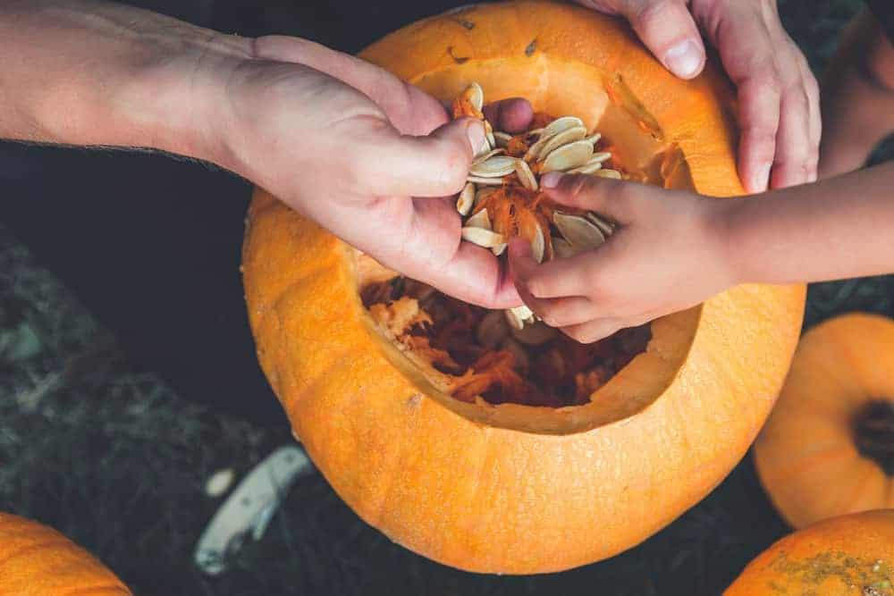 Fishing out pumpkin seeds from pumpkin