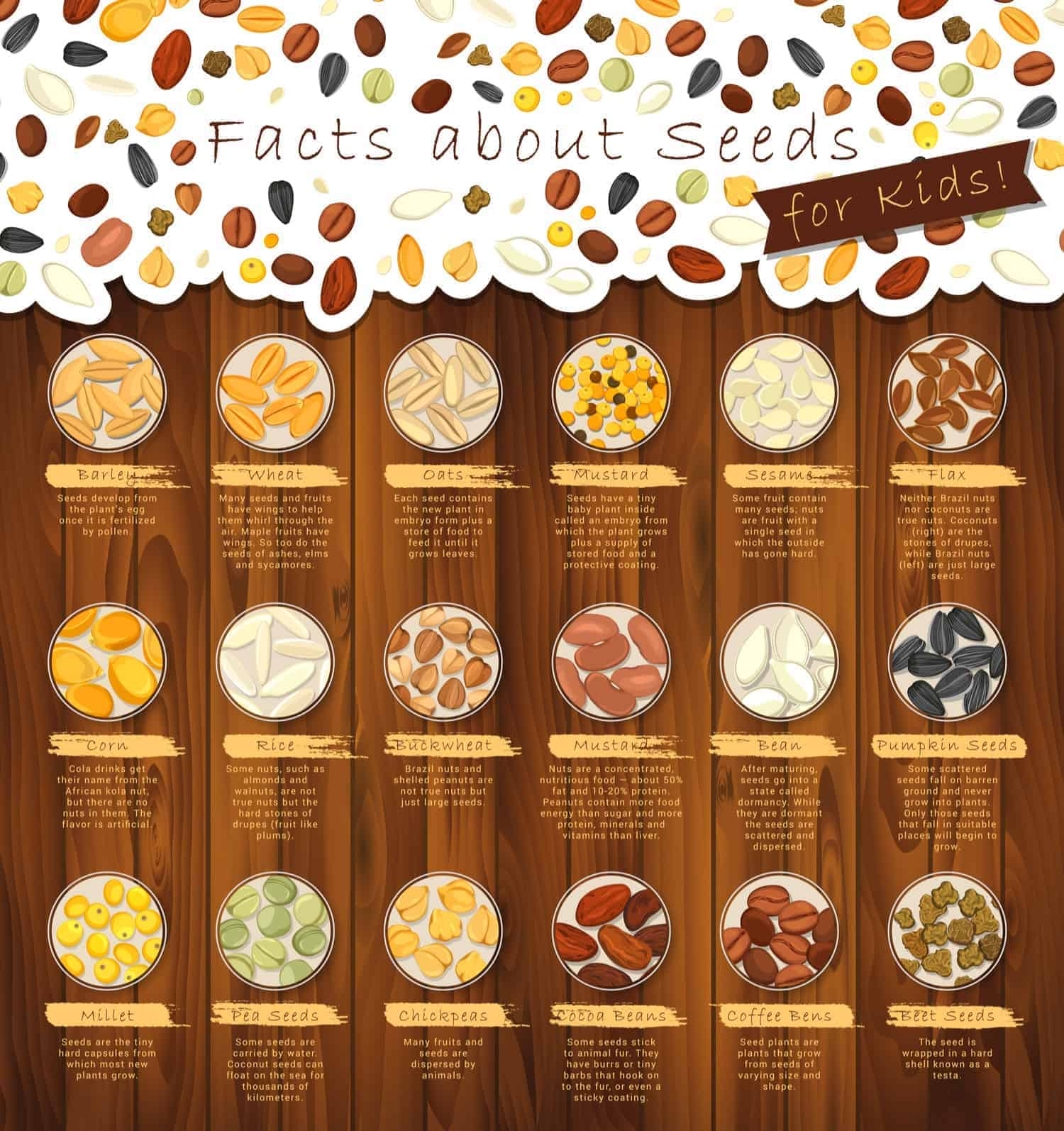Chart: Interesting edible seed chart and facts