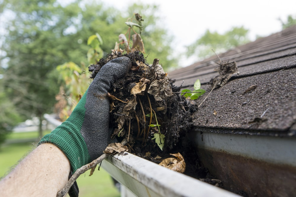 A close look at a gloved hand cleaning the debris from the rain gutter.