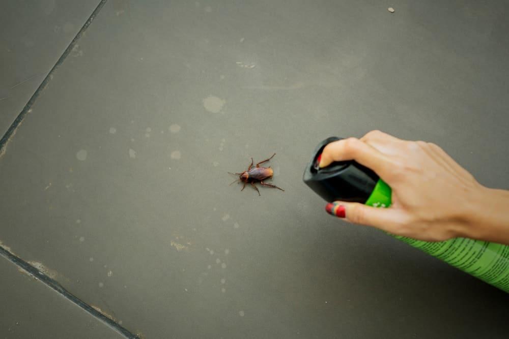 A woman spraying bug spray onto a cockroach.
