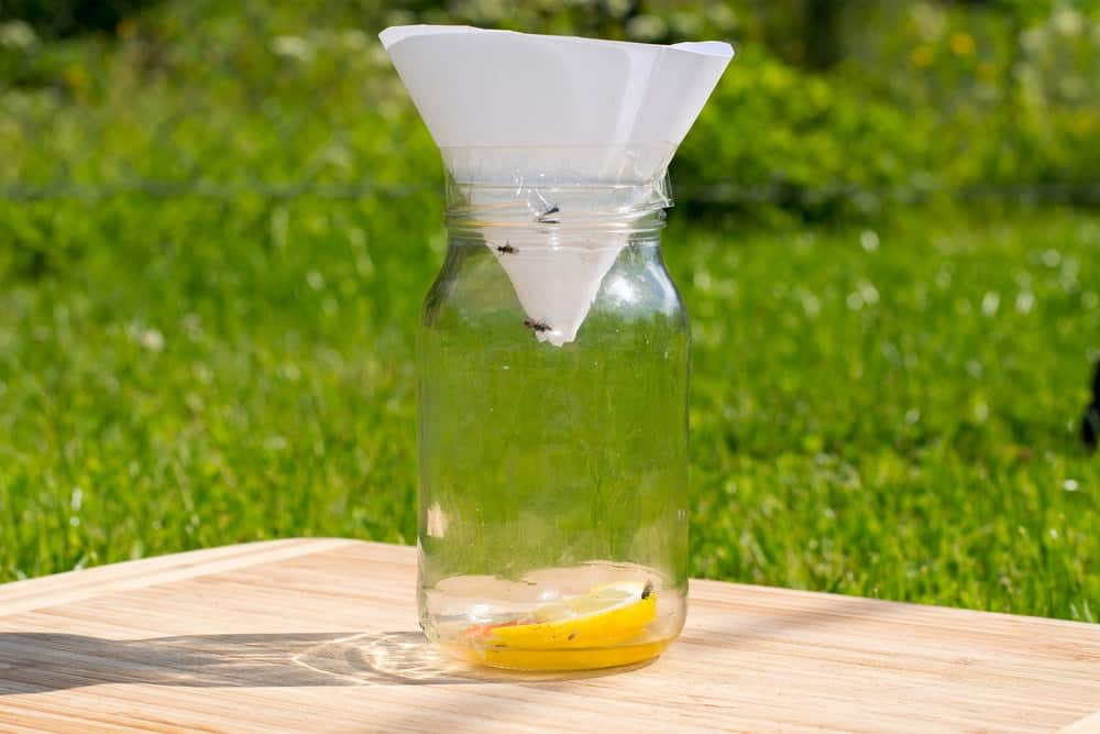 An improvised home-made fruit fly trap.