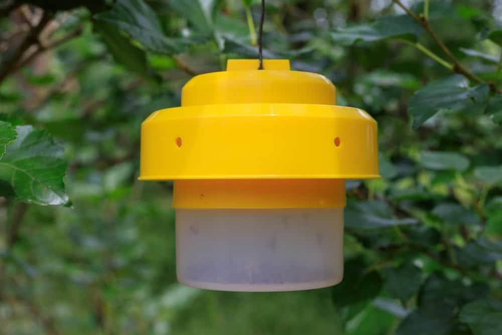 A hanging insect and fly trap for the garden.