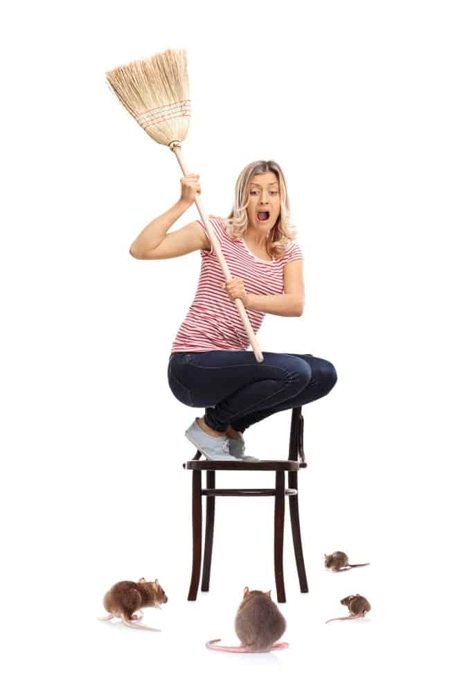 A woman on a chair fending off mice with a broom.