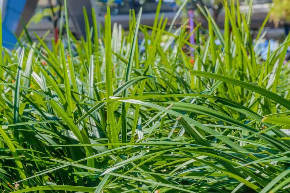 A close-up of wild unkempt grass.