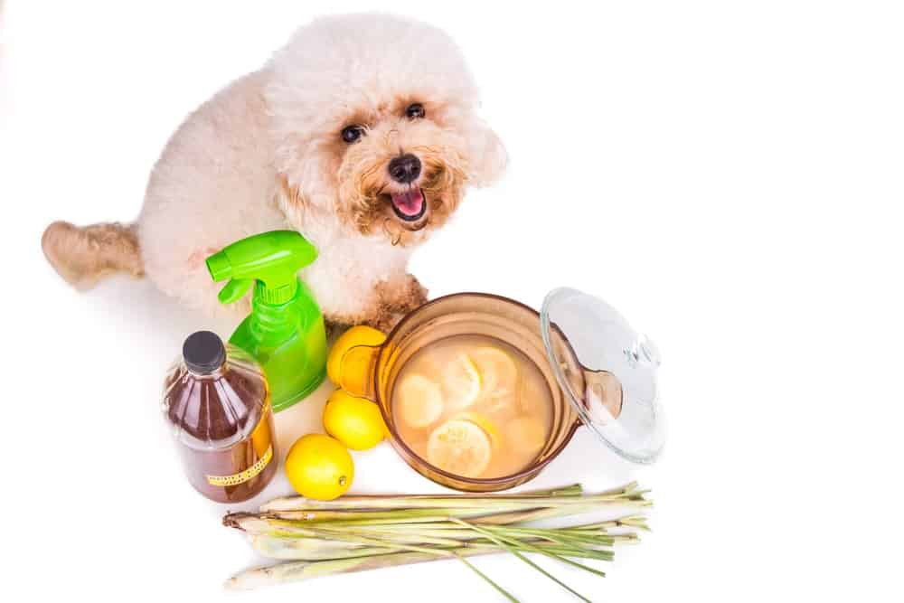 A home-made concoction of apple cider vinegar, lemon and lemon grass to keep fleas off the dog.