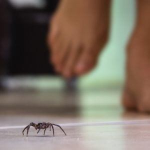 A common house spider running on a white tiled floor.