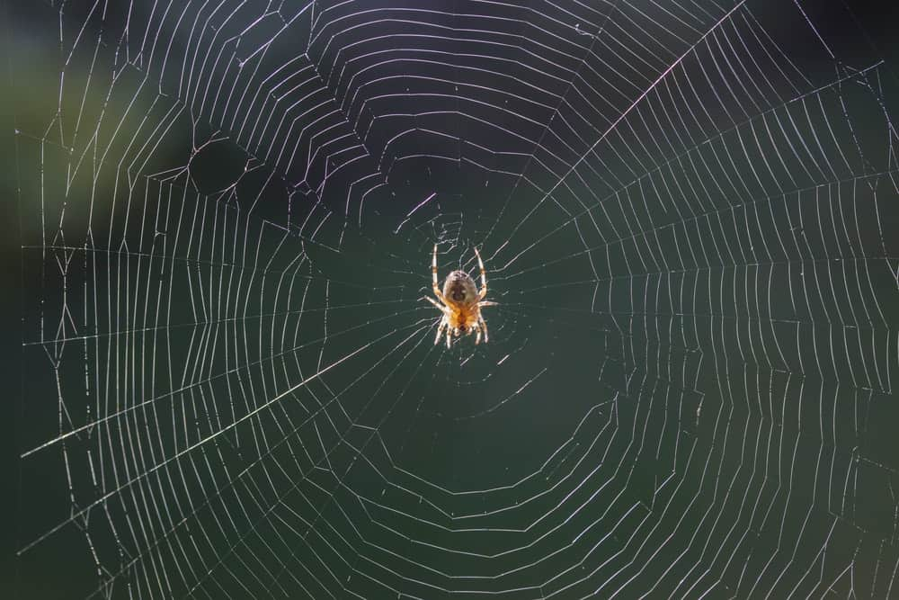 A spider in the middle of its web.
