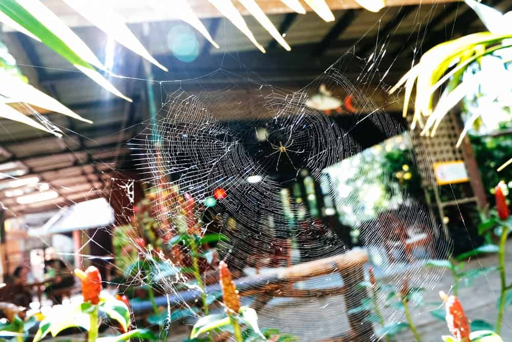 A large spiderweb in the middle of the plants in the house garden.