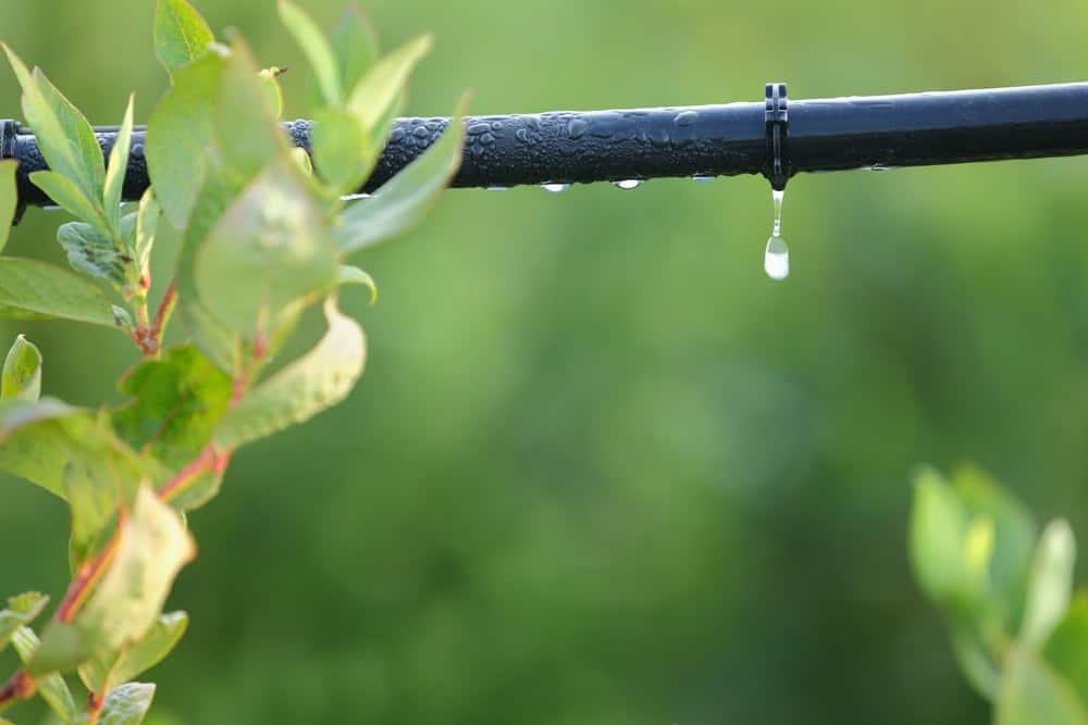 A dripping pipe on an irrigation system.