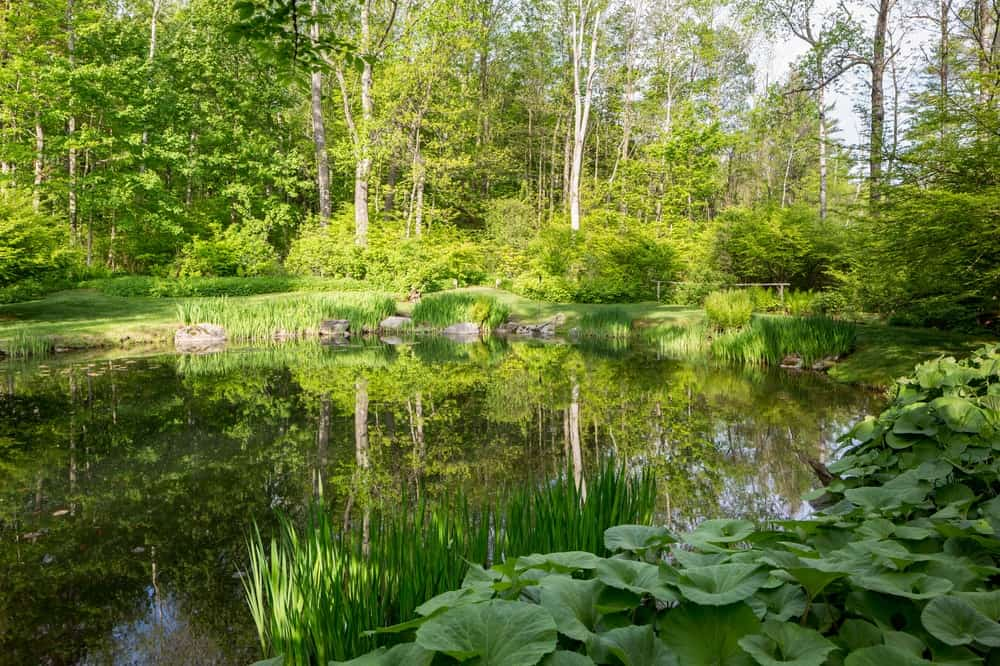 There is also a pond in the property surrounded by various shrubs and tall trees giving the place a more woodsy vibe. Images courtesy of Toptenrealestatedeals.com.