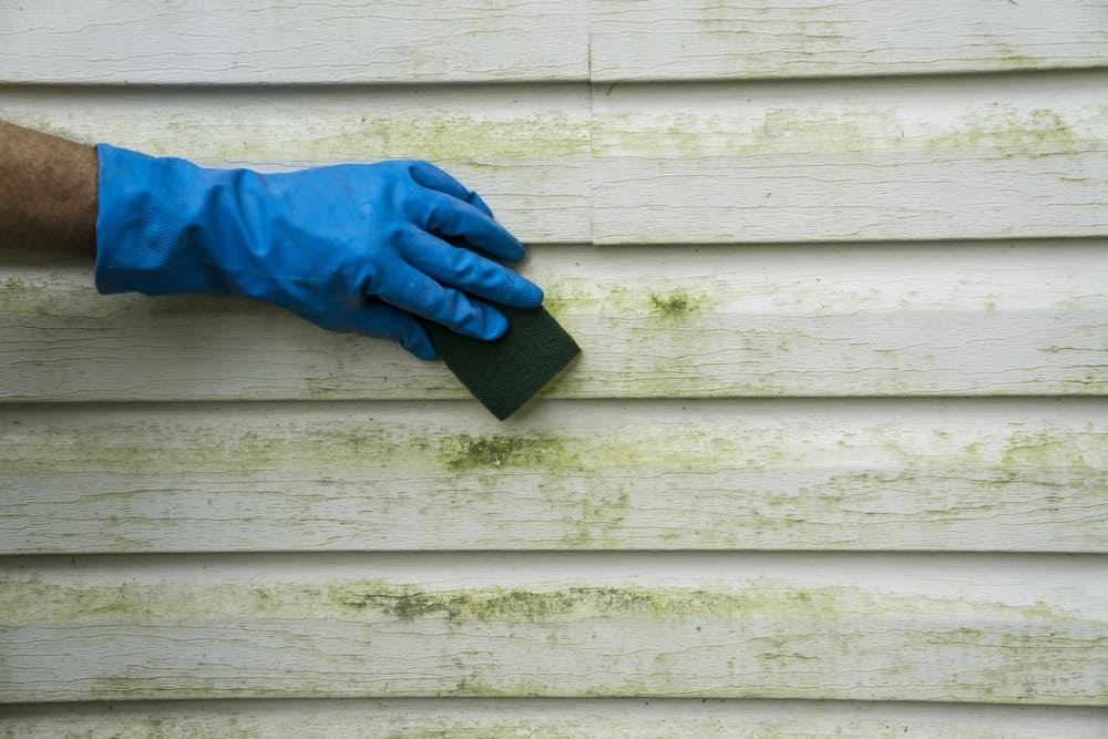 Scrubbing algae and mold off a vinyl siding.