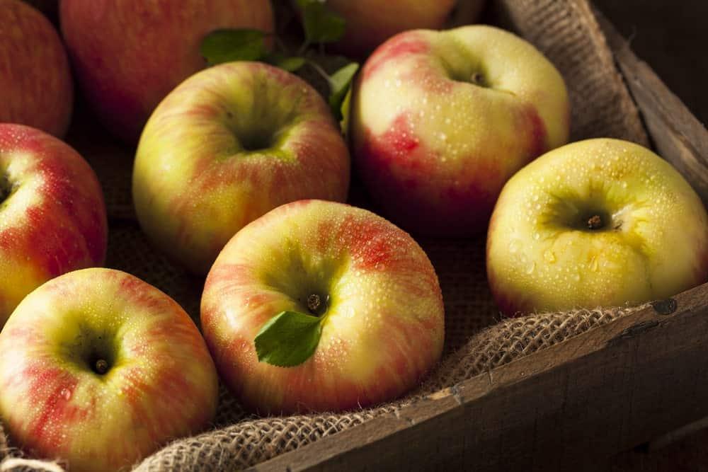 Bunch of Honeycrisp apples