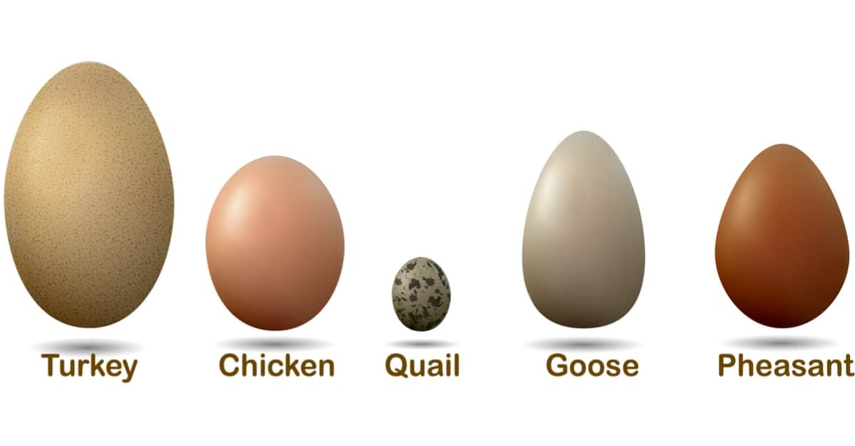An illustration of different eggs with labels.