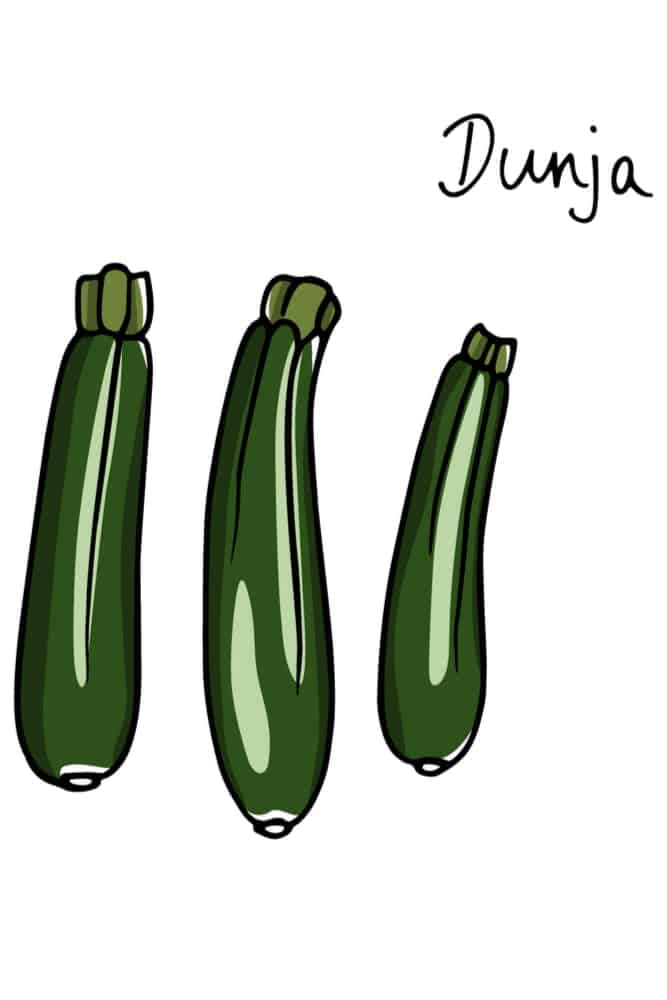 An illustration of dunja zucchinis.
