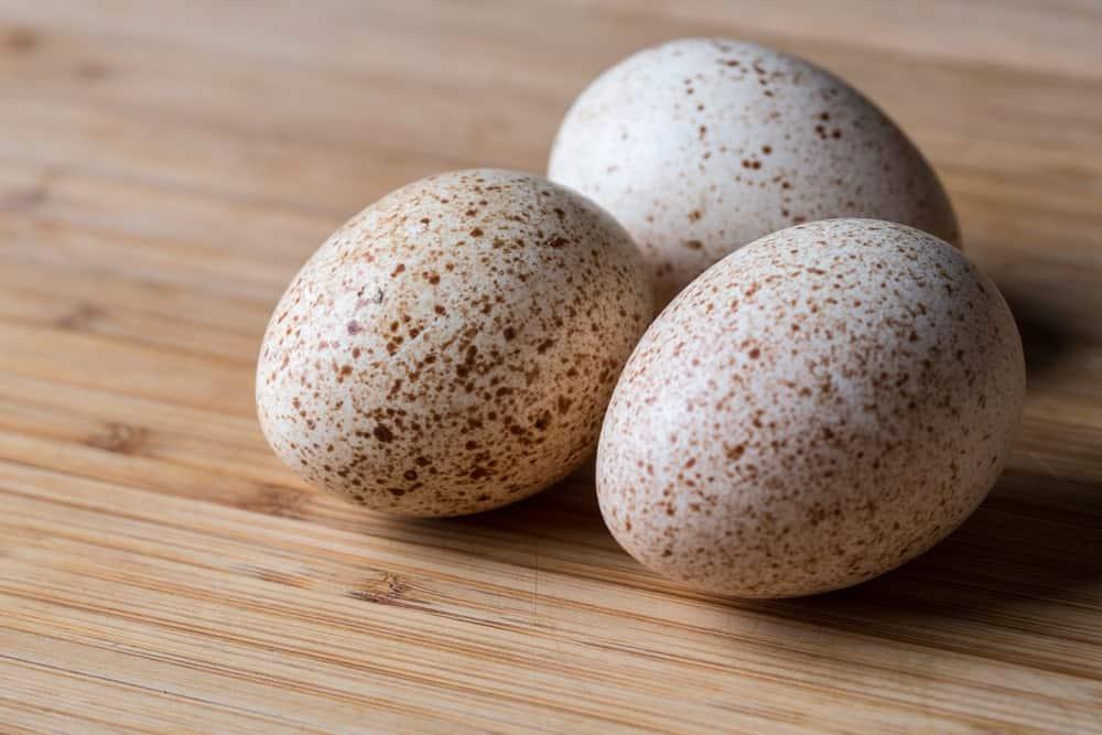 A close look at three turkey eggs.