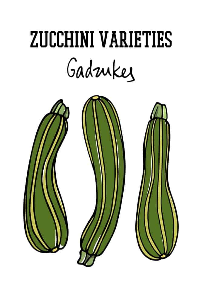 An illustration of gadzukes zucchinis.