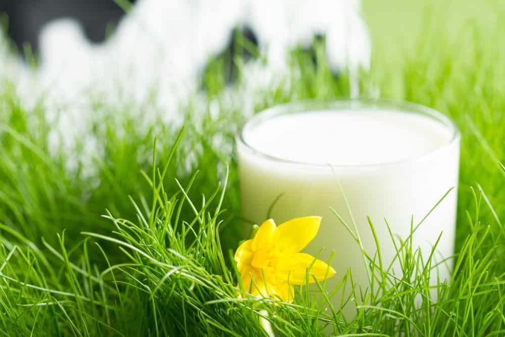 Fresh Organic Milk in a Glass