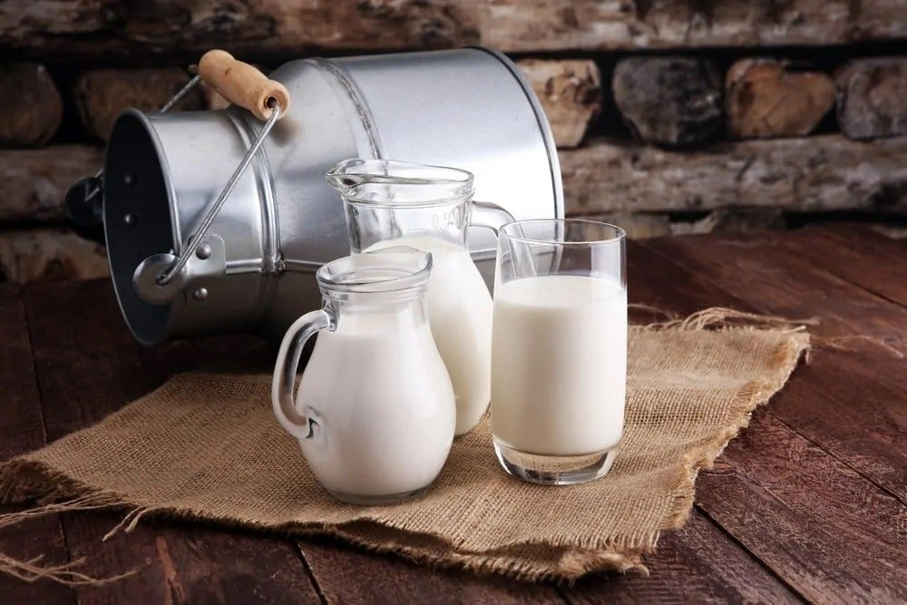 Three pitchers of milk on a gauze beside an empty tin container on a rustic background.
