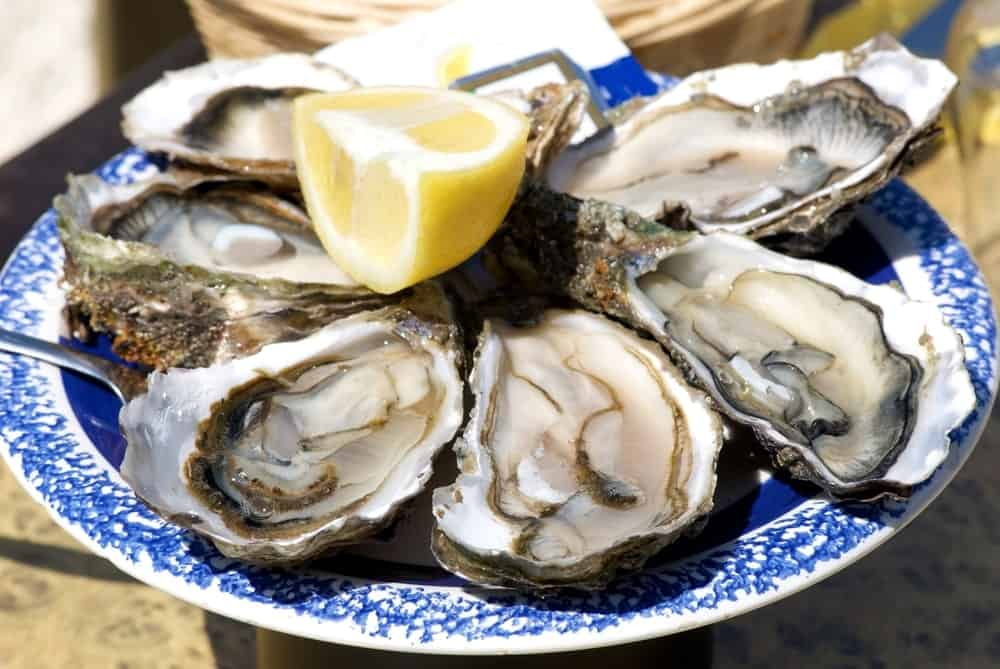 A plate of fresh Atlantic Oysters with a slice of lemon.