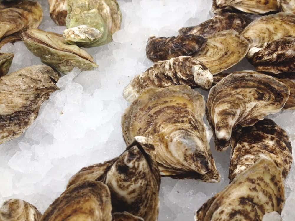 A bunch of fresh Beausoleil Oysters on ice.