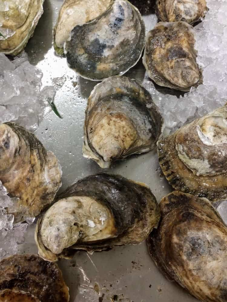 A bunch of fresh blue point oysters.