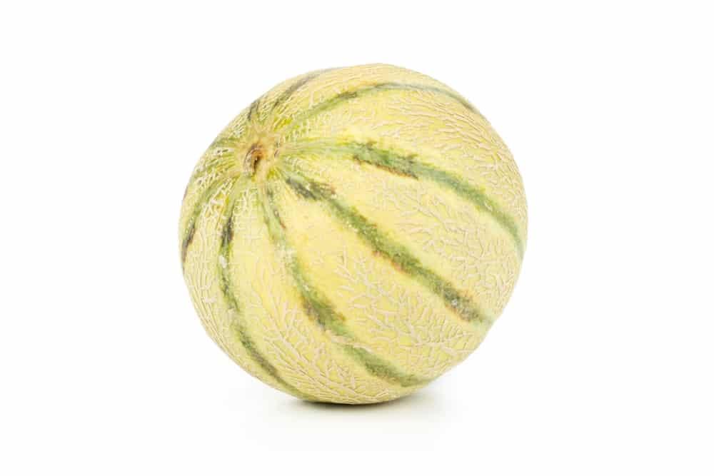 European Cantaloupe