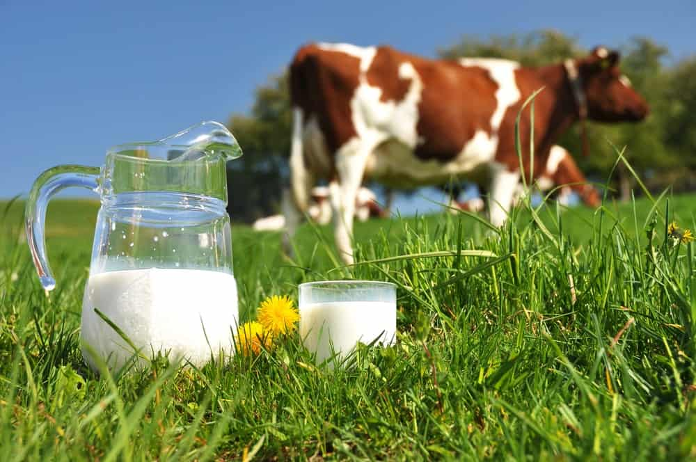 Jug and Glass with Fresh Cow Milk