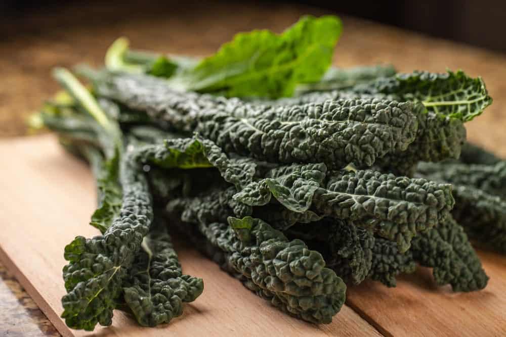 Fresh bunch of lacinato kale.
