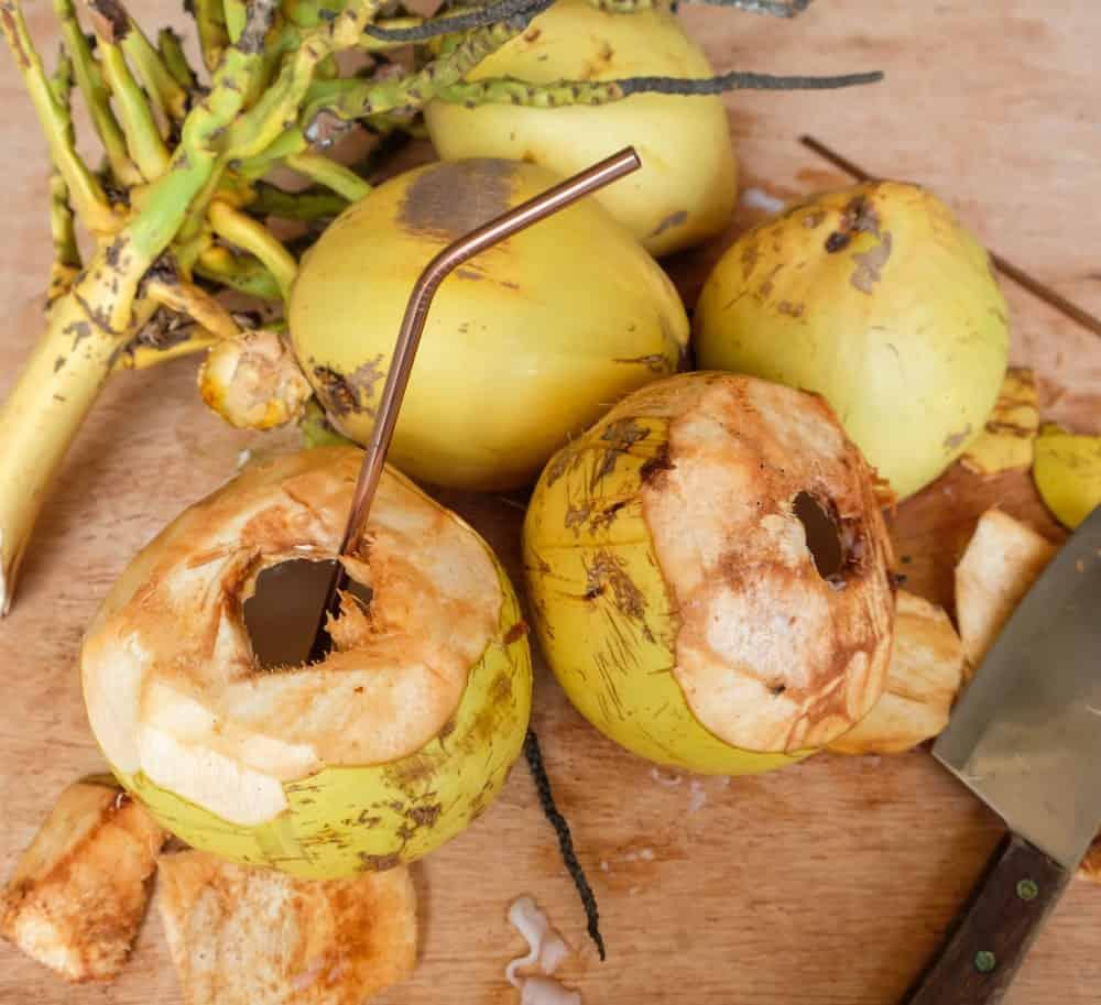 A look at Malayan Yellow Dwarf Coconuts.