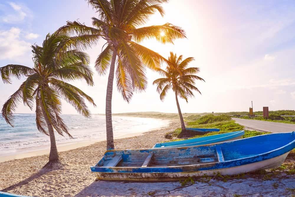 Maypan Coconut trees by the beach.