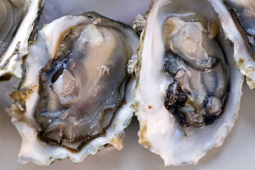 A close look at a couple of olympia oysters.