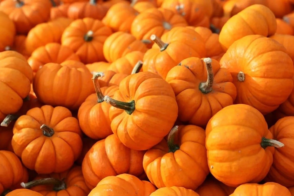 A bunch of pumpkins.