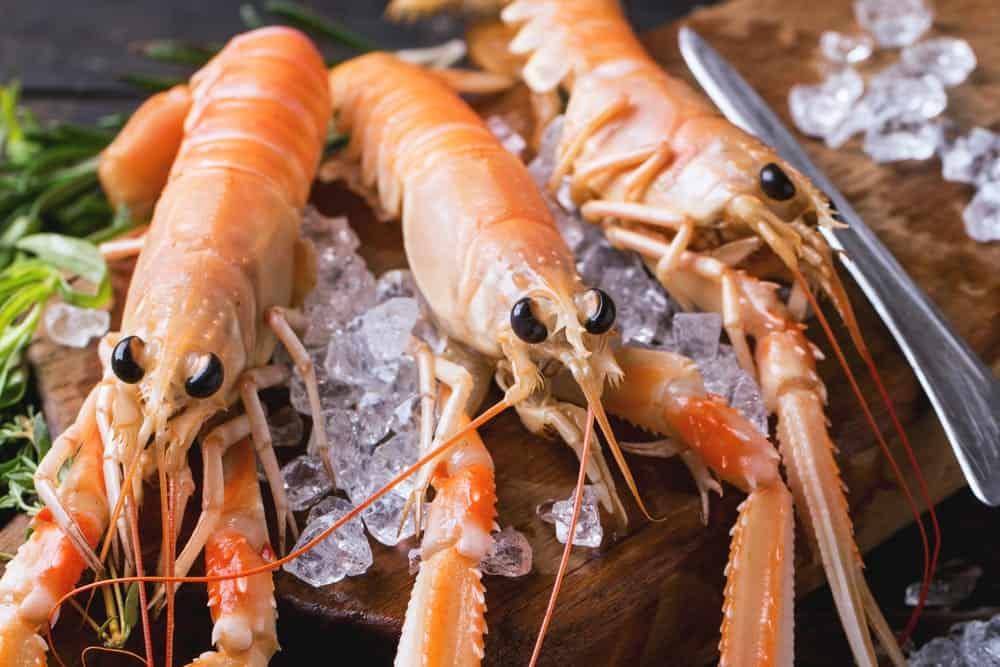 A close up look at three rock shrimps.