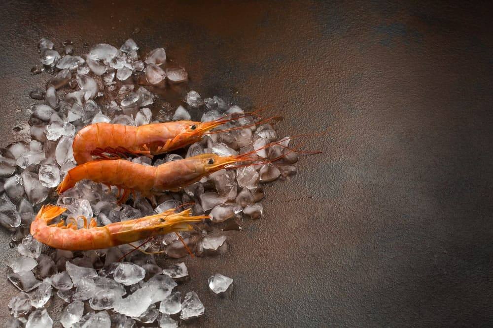 Three shrimps on ice cubes on a rustic background.