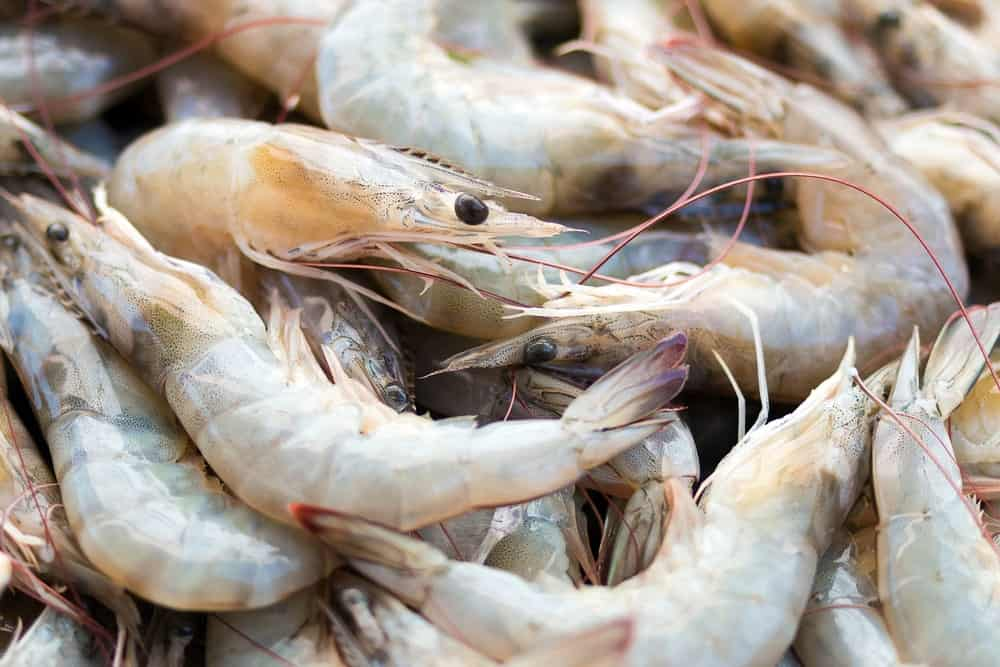 A bunch of raw white shrimps.